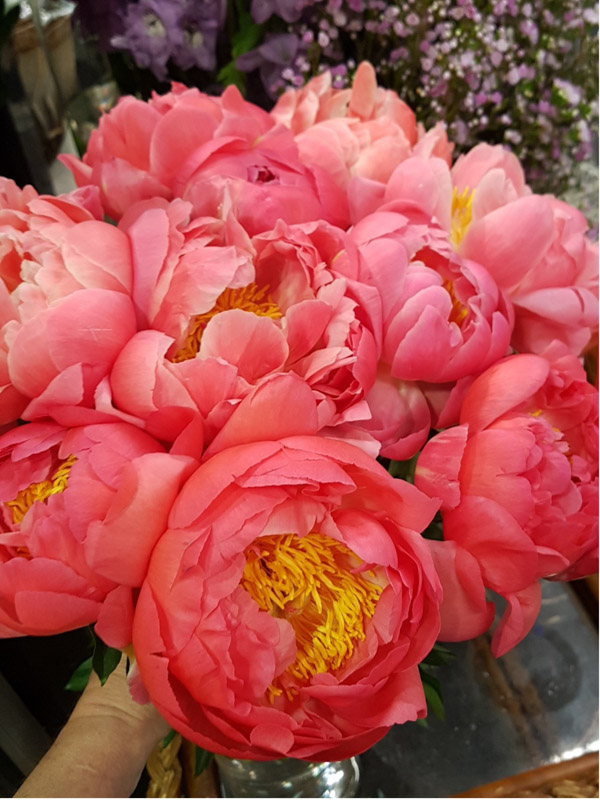 Coral Charm Peonies arranged ready to be gift-wrapped